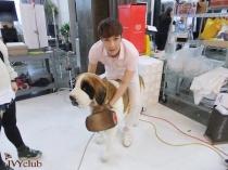 Lay & Dog