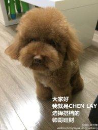 Chen & Lay's Puppy Partner Wang Cai