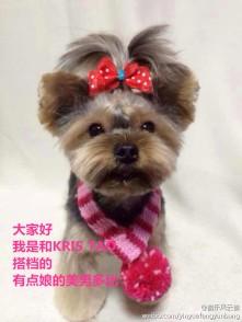 Kris & Tao's Puppy Partner Doby