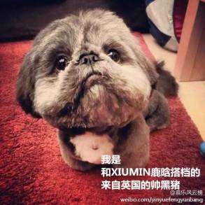 Xiumin & Luhan's Puppy Partner Hei Zhu